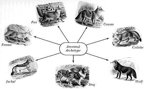 Seleção Natural no Criacionismo Bíblico TaylorIMMfcCanidaeDogKindM