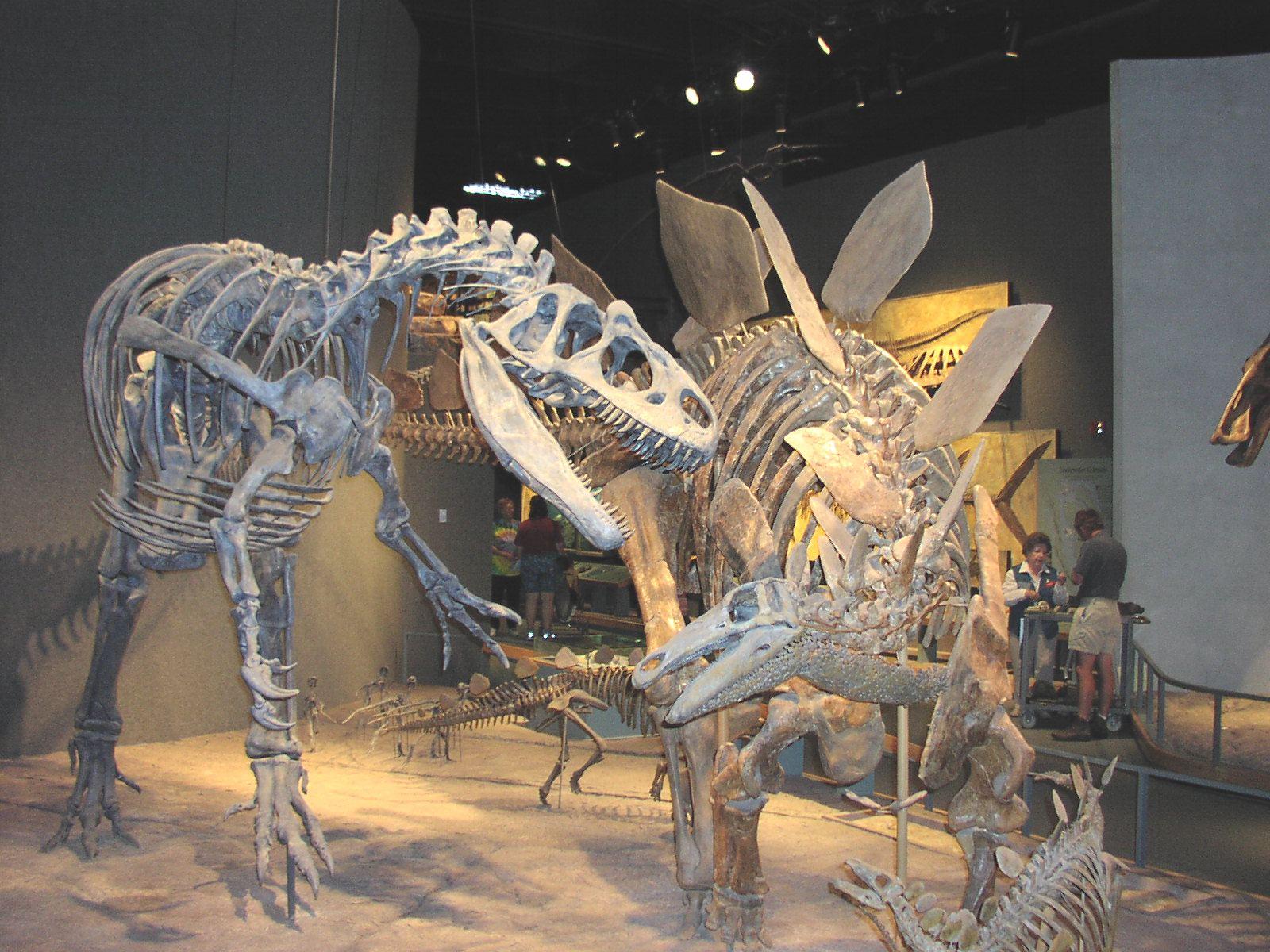 Trex Vs Stegosaurus