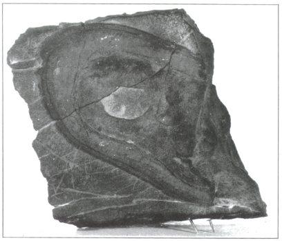 alleged nevada shoe print